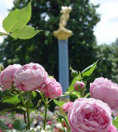Rosenblüte auf der Insel (24)